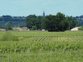 Le Vignoble - Culture bio